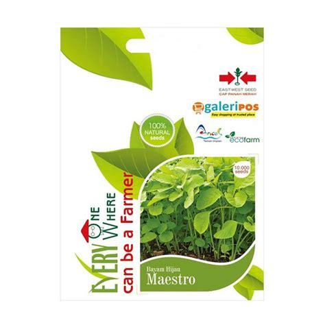 15 Biji Benih Turi Merah jual panah merah maestro benih bayam hijau 10 000 biji harga kualitas terjamin