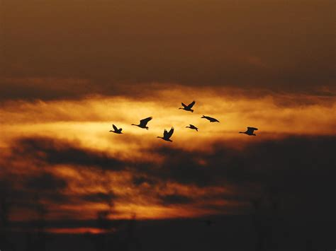 why do birds migrate migration week
