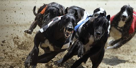 puppy racing stock market like racing business insider
