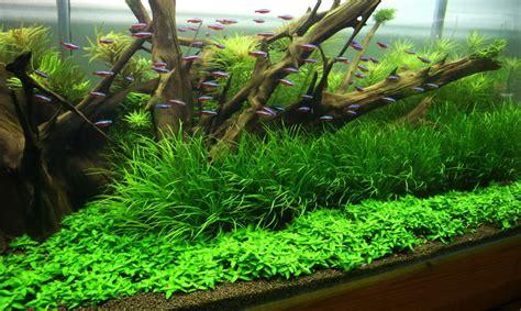 aquascape environmental een aquarium opstarten 5 tips voor een probleemloze start