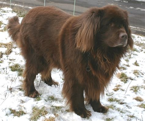 types of large dogs different breeds our dogs and us