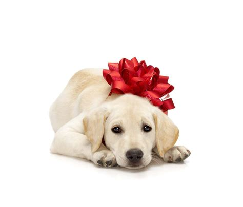 how much water to give a puppy pet gifts archives the ark spa