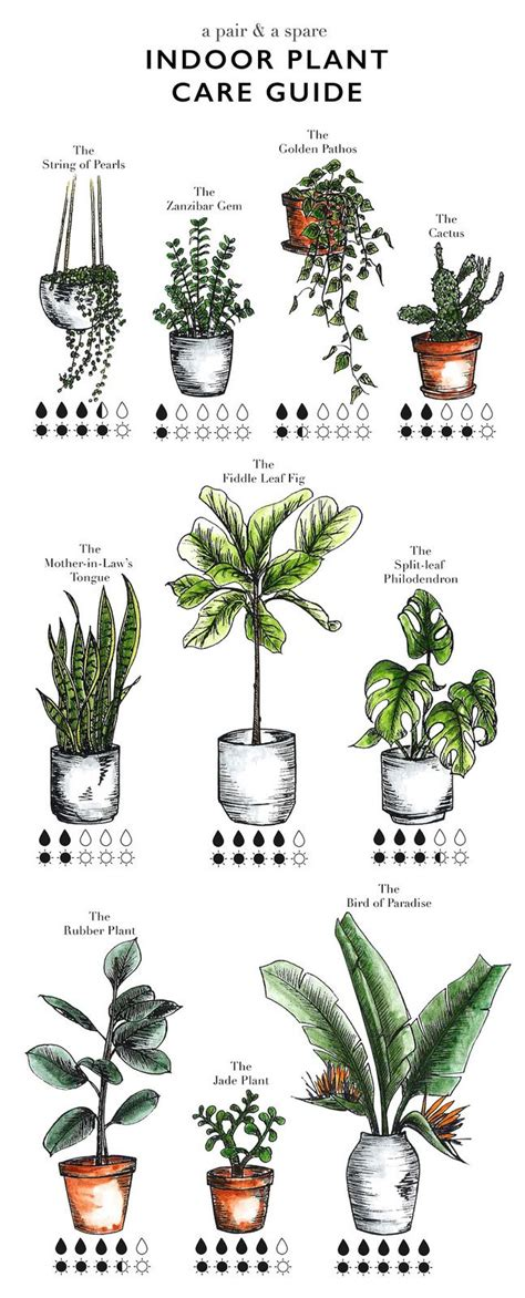 a guide to indoor gardening cnn illustrated indoor plant care watering guide garden