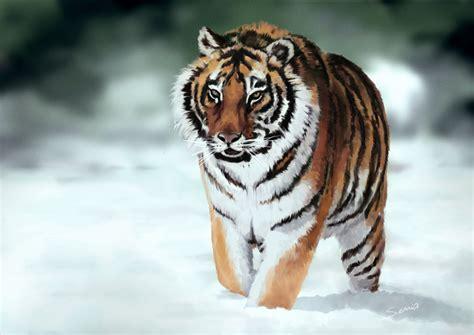 imagenes tumblr de tigres tigre siberiano by edersuria on deviantart