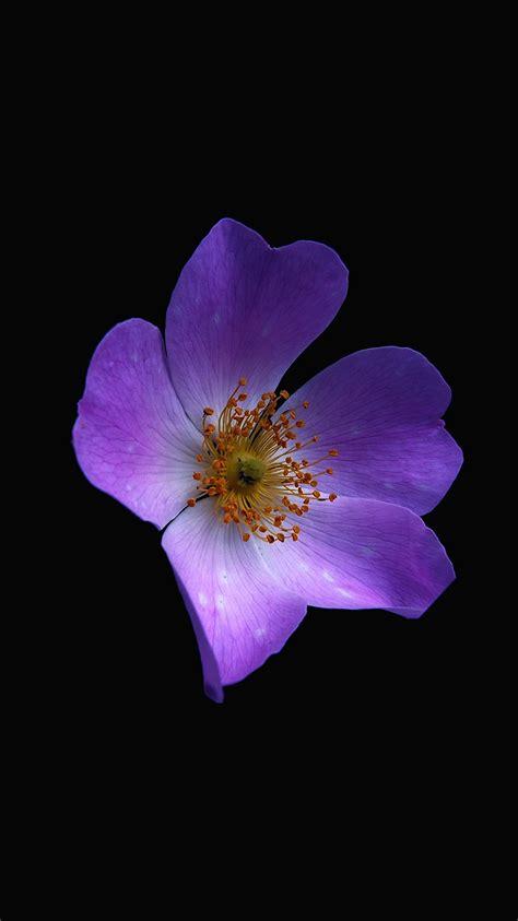 apple wallpaper purple flower iphonepapers com apple iphone8 wallpaper nr38 macro flower