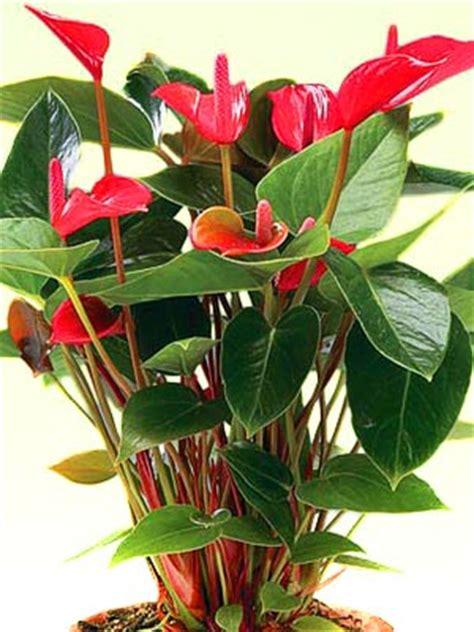 tanaman pembersih udara ruangan alami desain rumah