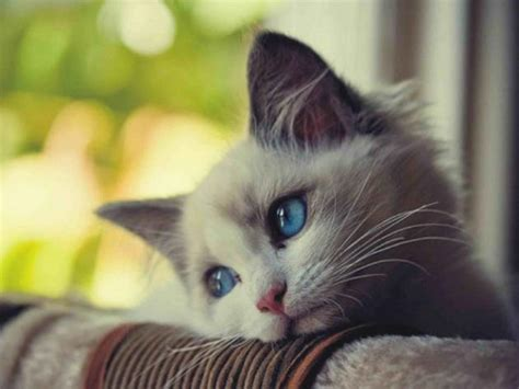 imagenes de gatitos llorando los 10 gatos m 225 s tristes de internet fress
