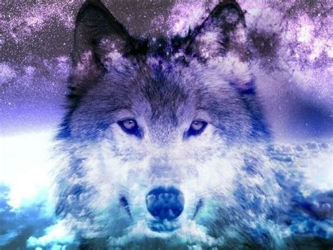 wallpaper tumblr wolf 49 best galaxy wolf images on pinterest wolves wolf