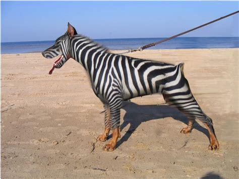 imagenes animales asombrosos animales asombrosos con photoshop taringa