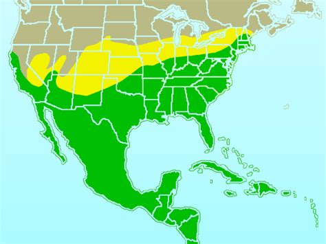 file northern mockingbird rangemap gif wikimedia commons