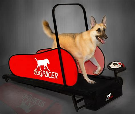 puppy treadmill dogpacer the world s best selling pet treadmill