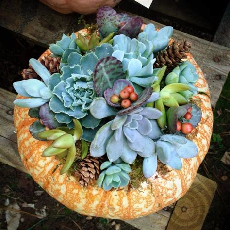 84 best images about designs by southeast succulents on pinterest hard at work pumpkins and leon