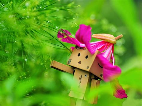 wallpaper danbo romantis deloiz wallpaper