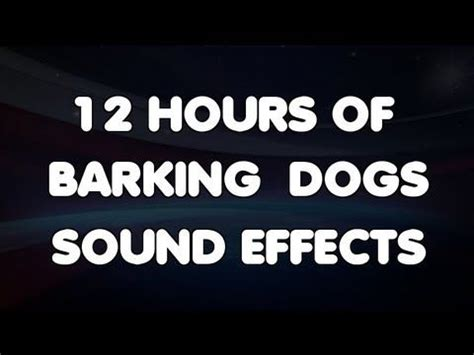 dog barking sound effect 12 hours of barking dogs sound effects youtube for what do you hear listening activity