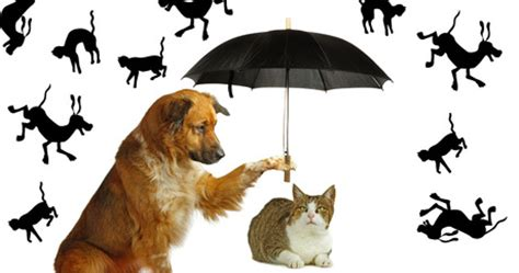 raining cats and dogs meaning fascinating origins of 6 everyday expressions about dogs dogtime
