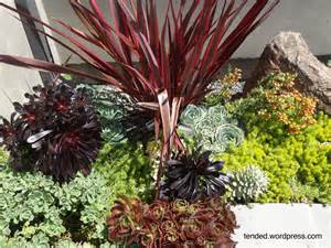 Succulent Gardens Ideas Succulent Garden Ideas Mixed Succulent Beds In A Modern Garden Tended