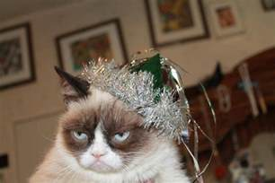 the year of the cat new year new year grumpy cat grumpy cat picture