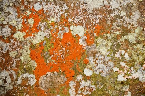 white mold on concrete wall important things you need to about orange mold