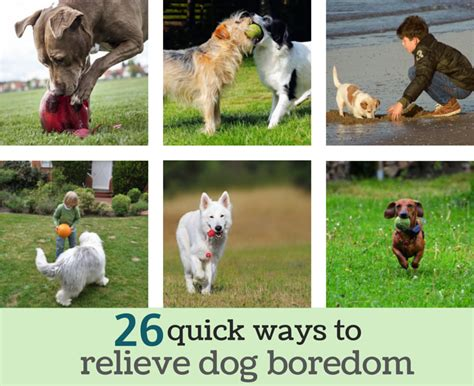best puppy toys to keep them busy 26 simple ways to relieve boredom puppy leaks