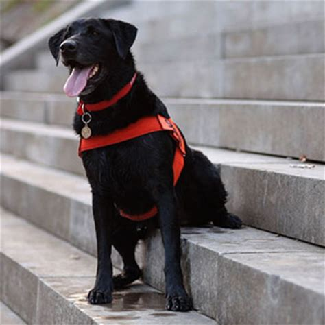search  rescue dogs category soot hero dog awards hallmark channel