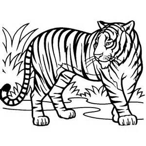desenho tigre bonito colorir tudodesenhos