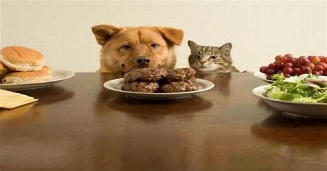 diet for dogs recipes food recipes for dogs pie dogalize