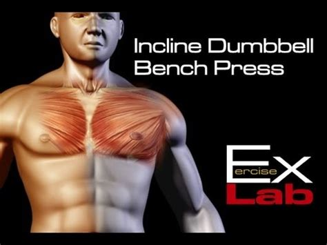 incline bench muscle group incline bench press dumbbells chest exercises youtube