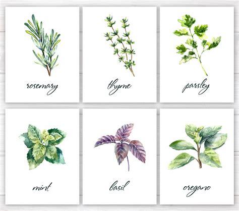 free printable herb poster herbs print kitchen print kitchen printable watercolor