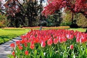 Tulip Flower Garden Portcitydailyphoto Tulip Garden