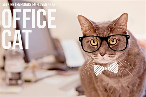 Office Cat by Office Cat Humane Society Of Broward Countyhumane