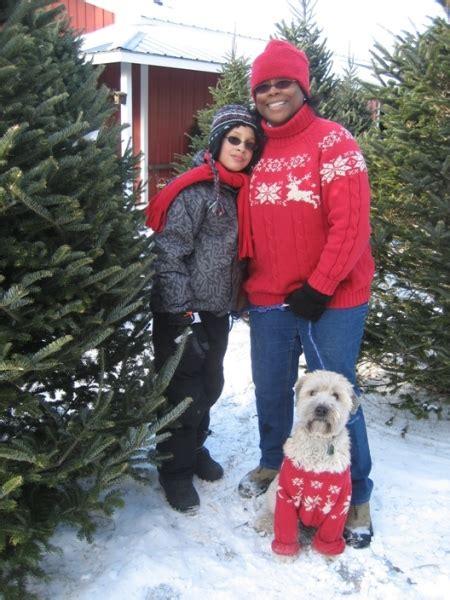 home cut your own christmas trees christmas tree farm