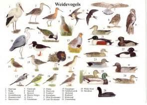 Backyard Birds Of Indiana The Postal Picture Field Birds