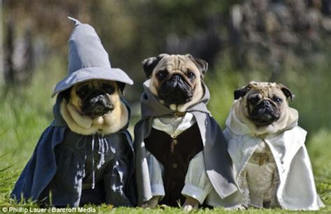 lord pug pugs dressed up as lotr characters things