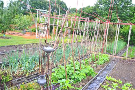 Quand Semer Les Haricots Verts by Quand Planter Haricots Verts