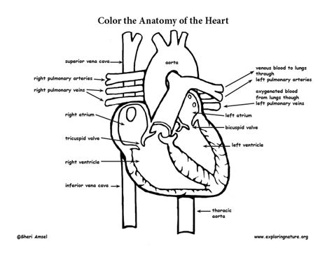 anatomy coloring pages anatomy coloring page
