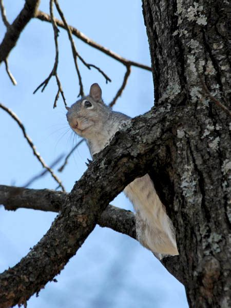 how to hunt squirrels in your backyard how to in on the squirrel crop