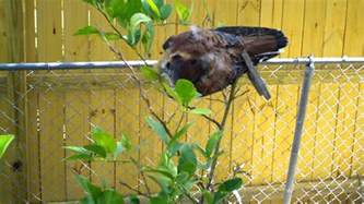 how to scare away birds from your garden plants