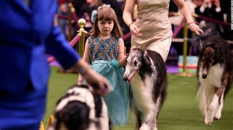 westminster kennel club show 2017 westminster kennel club show 2017