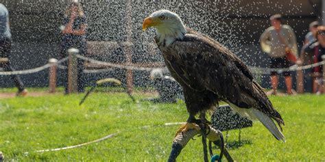 alberta birds of prey coaldale canada conservation center