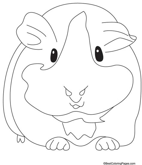 Guinea Pig Printable Coloring Pages Guinea Pig Coloring