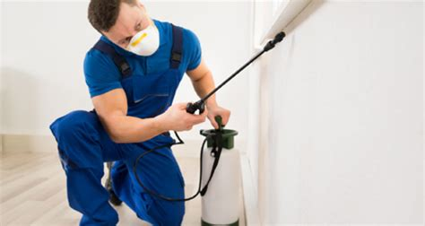professional bed bug exterminators haldimand pest bed bug extermination services in haldimand