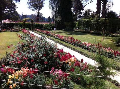 Rose Garden Picture Of The Grand Hotel Nuwara Eliya Hotel Flower Garden