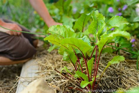 Creative Vegetable Gardener Your Favorite Blog Posts Of Vegetable Gardening Blogs