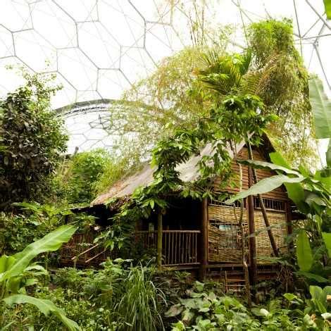 rainforest biome worlds largest indoor rainforest eden
