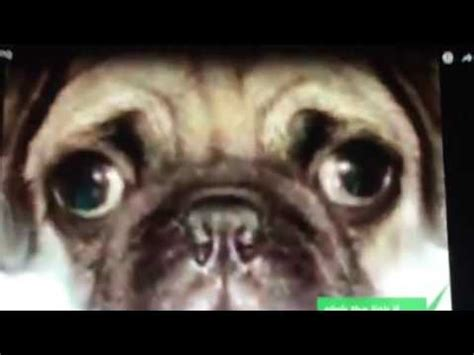 pug songs pug song