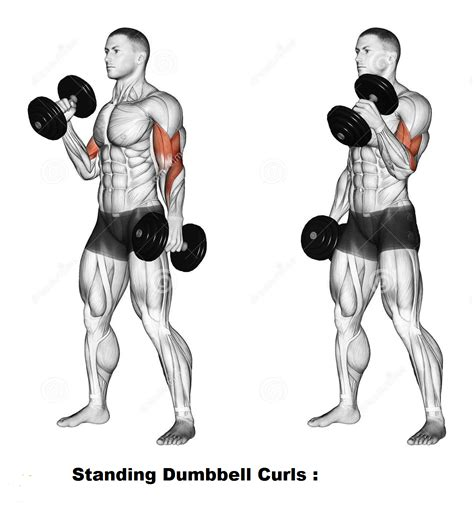 best dumbbell exercises for biceps all bodybuilding