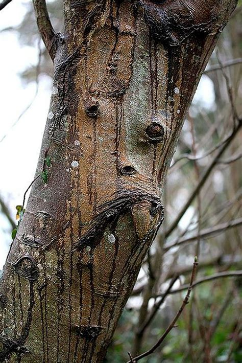 tree face 37 trees that look like something else and will make you