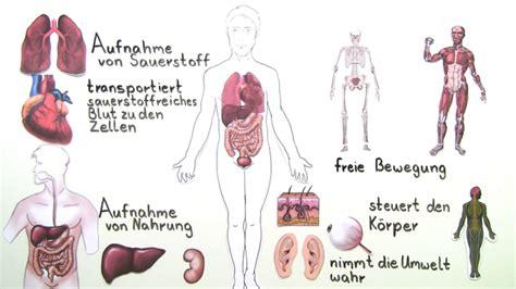 innere organe des menschen schaubild organe des menschen 220 berblick 220 bungen arbeitsbl 228 tter