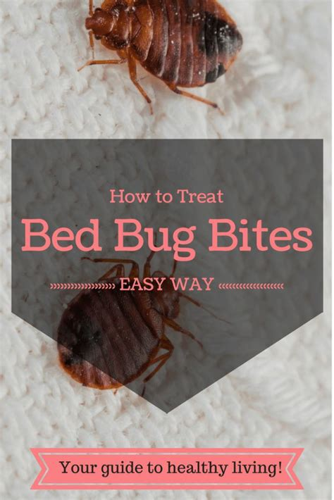 Getting Rid Of Bed Bug Bites by 1000 Ideas About Bed Bug Remedies On Bed Bugs