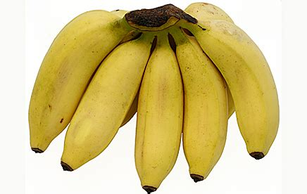 apple banana what is the best type of banana 30 bananas a day